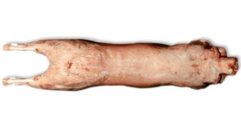 Patagonian Lamb carcass